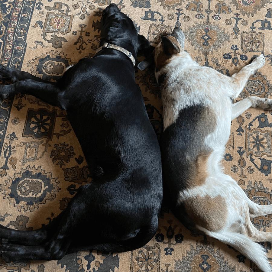 Canadentools Support Pups